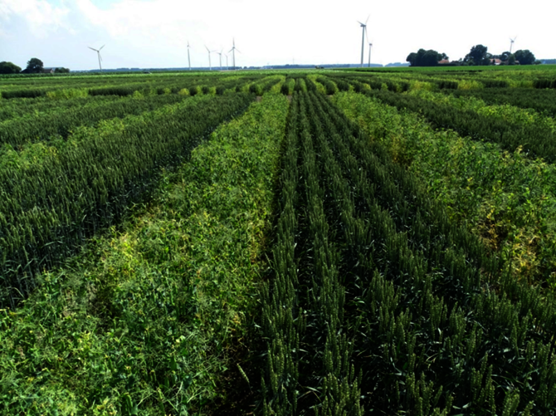 what are the advantages of strip cropping